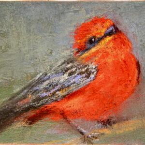 Santa Fe Marketplace Amanda Houston – Vermillion Flycatcher