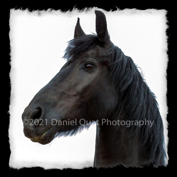 Santa Fe Marketplace Canvas Prints from Equine (horse) Photographs