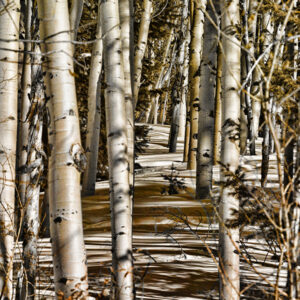 Santa Fe Marketplace Textured Photography by Karen Waters 'Among the Aspens Deep'